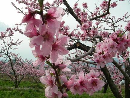 Chausu_nattou_tatsuzawa159