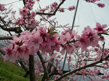 Chausu_nattou_tatsuzawa158