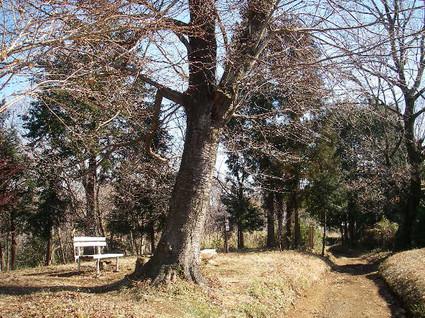 Shibusawa_kyuryo67