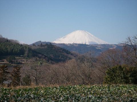Shibusawa_kyuryo73