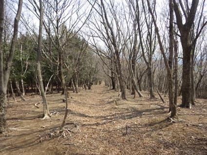 Takekawadake_izugatake0084