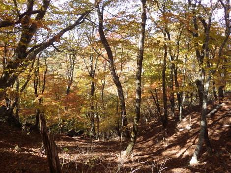 Kaminikkawa_genjiro0153