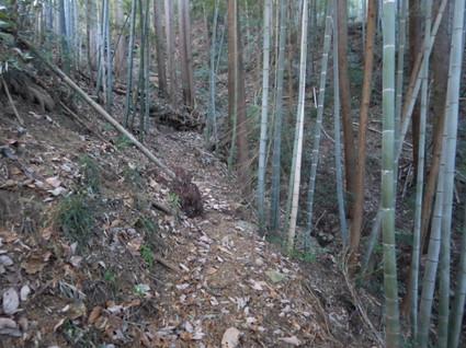 Itadori_yanooto0020