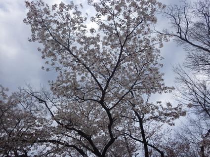 Kobotoke_shiroyama0099