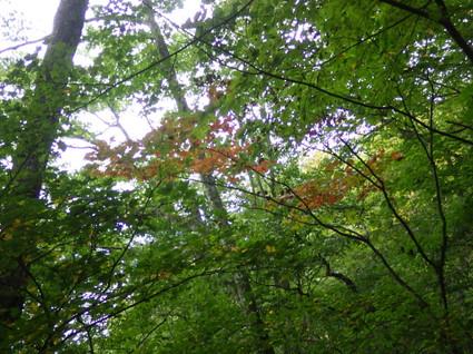Matsushimatoge0142