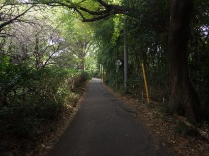 Kinunomichi0002